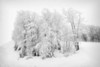Frozen trees....................................to purchase print or digital file e mail DFriend150@gmail.com
