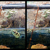 Sequence archer fish jumping out of water to prey on insect