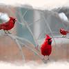 three cardinals in a tree