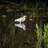 Wading birds of South Florida
