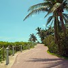 Miami Beach Motion video tropical palm trees and beaches