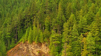 Washington USA forest green pine trees