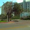 Belle Isle Miami Beach full of debris after Hurricane Irma