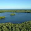 Aerial island of mangrove trees