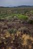 AZ-2013-047: Organ Pipe Cactus National Monument, Pima County, AZ, USA