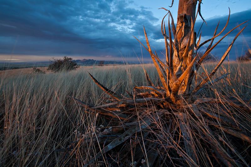 AZ-2009-021: , Santa Cruz County, AZ, USA