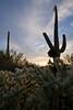 AZ-2008-010: Tucson, Pima County, AZ, USA