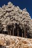 AZ-2013-032: Mount Lemmon, Pima County, AZ, USA