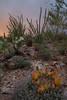 AZ-2012-034: Tucson, Pima County, AZ, USA