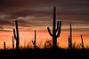 AZ-2008-022: Tucson, Pima County, AZ, USA