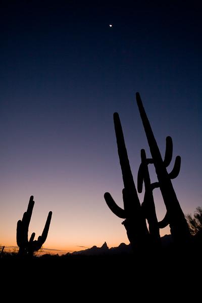 AZ-2007-066: Organ Pipe Cactus National Monument, Pima County, AZ, USA