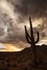 AZ-2012-024: , Pima County, AZ, USA