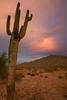 AZ-2008-044: Tohono O'Odham Indian Reservation, Pinal County, AZ, USA