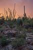 AZ-2012-035: Tucson, Pima County, AZ, USA