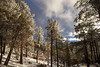 AZ-2013-034: Mount Lemmon, Pima County, AZ, USA