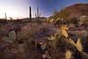 AZ-2010-137: Tucson, Pima County, AZ, USA