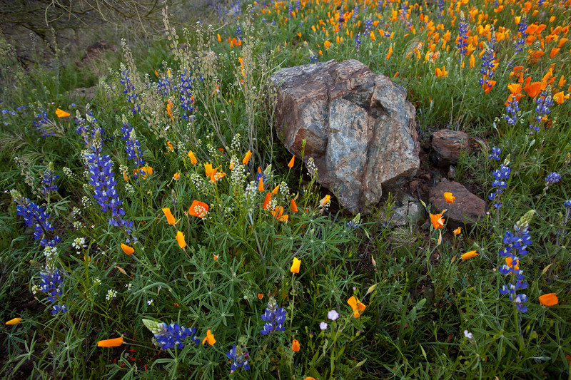 AZ-2010-080: Peachville Mountain, Pinal County, AZ, USA