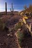 AZ-2010-139: Tucson, Pima County, AZ, USA