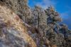 AZ-2013-029: Mount Lemmon, Pima County, AZ, USA