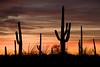 AZ-2008-024: Tucson, Pima County, AZ, USA