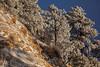 AZ-2013-028: Mount Lemmon, Pima County, AZ, USA