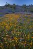 AZ-2010-077: Peachville Mountain, Pinal County, AZ, USA