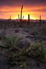 AZ-2010-009: Tucson, Pima County, AZ, USA