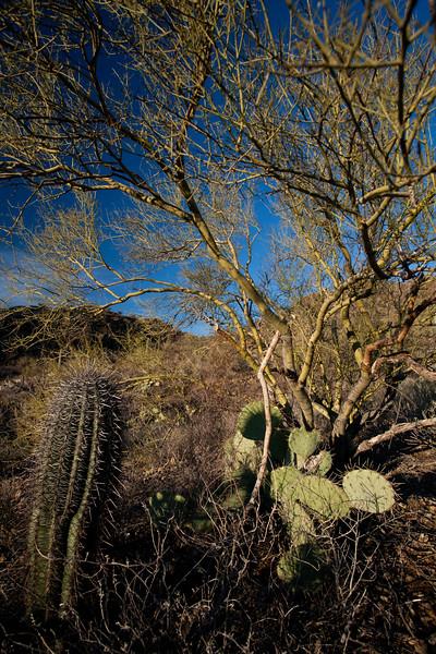 AZ-2010-030: Tucson, Pima County, AZ, USA