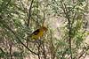 AZ-2009-024: Tucson, Pima County, AZ, USA