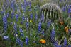 AZ-2010-075: Peachville Mountain, Pinal County, AZ, USA