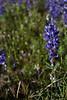 AZ-2010-070: , Pinal County, AZ, USA