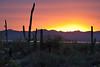 AZ-2010-008: Tucson, Pima County, AZ, USA