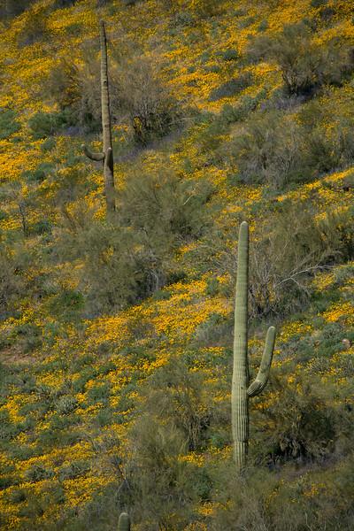 AZ-2008-005: Bartlett Lake Recreation Area, Maricopa County, AZ, USA