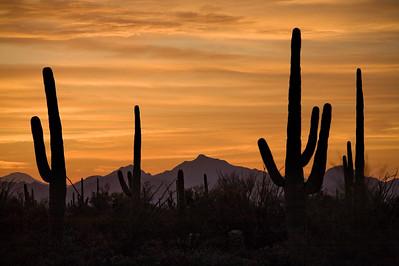 AZ-2008-017: Tucson, Pima County, AZ, USA