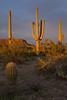 AZ-2008-012: Tucson, Pima County, AZ, USA