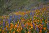 AZ-2010-085: Peachville Mountain, Pinal County, AZ, USA