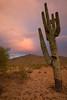 AZ-2008-043: Tohono O'Odham Indian Reservation, Pinal County, AZ, USA