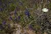 AZ-2010-046: , Pinal County, AZ, USA