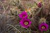 AZ-2010-055: Tohono O'Odham Indian Reservation, Pinal County, AZ, USA