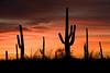 AZ-2008-021: Tucson, Pima County, AZ, USA