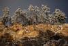 AZ-2013-027: Mount Lemmon, Pima County, AZ, USA