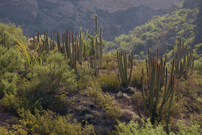 AZ-2007-069: Organ Pipe Cactus National Monument, Pima County, AZ, USA
