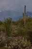 AZ-2012-033: Tucson, Pima County, AZ, USA