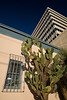 AZ-2008-029: Tucson, Pima County, AZ, USA