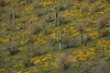 AZ-2008-004: Bartlett Lake Recreation Area, Maricopa County, AZ, USA