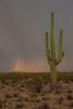 AZ-2012-023: , Pima County, AZ, USA