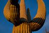 AZ-2008-014: Tucson, Pima County, AZ, USA