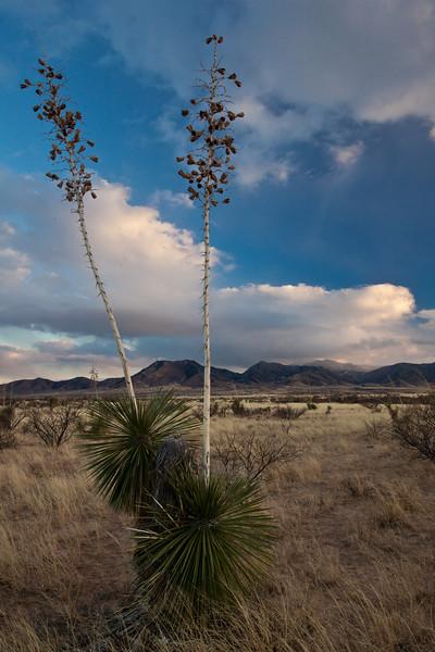 AZ-2011-064: Dragoon Mountains, Cochise County, AZ, USA
