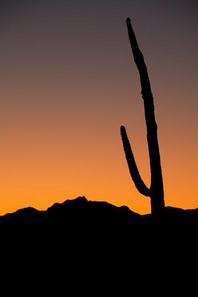 AZ-2009-005: Tohono O'Odham Indian Reservation, Pima County, AZ, USA