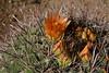 AZ-2006-025: Ajo, Pima County, AZ, USA